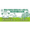 あきたこまち「ゆうこちゃんのお米」 令和元年新米 白米 5kg 雲龍和紙フレブレスパック 特別栽培米 単一農家米R-100 水田環境特A 秋田県産