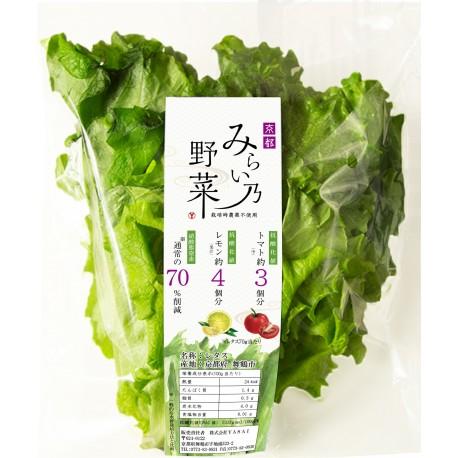 高抗酸化値レタス みらい乃野菜 ふわレタス