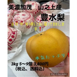 美濃加茂山之上産 豊水梨 3kg 5〜9個入 ※